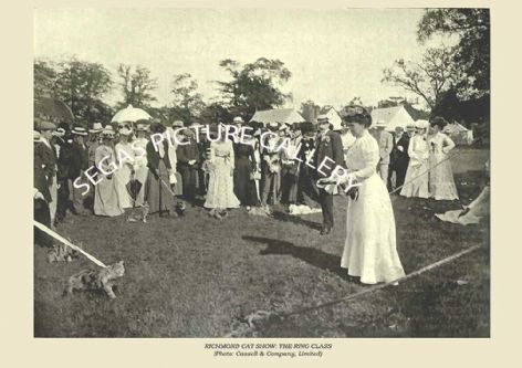 Fine art print of the RICHMOND CAT SHOW: THE RING CLASS (Photo: Cassell & Company, Limited) by Frances Simpson (1903)
